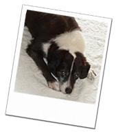 Taffy enjoying his dog holiday in Hampshire with Eva