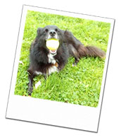 Tilly enjoys playing ball on holiday with Surrey Dog Carer Angela