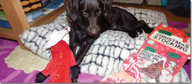 Treacle with presents at Christmas