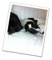 Whisky and Jewel on a Wagging Tails dog holiday