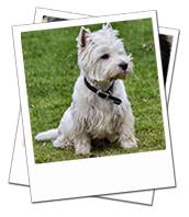 Wisden enjoyed his Alton dog boarding holiday with Ellen