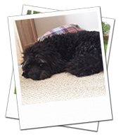 Alfie enjoying a nap on his York dog boarding holiday with Wagging Tails