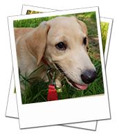 Baxter enjoying his Yorkshire holiday with Dog Carer Mal